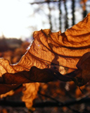 Blatt in Abendsonne